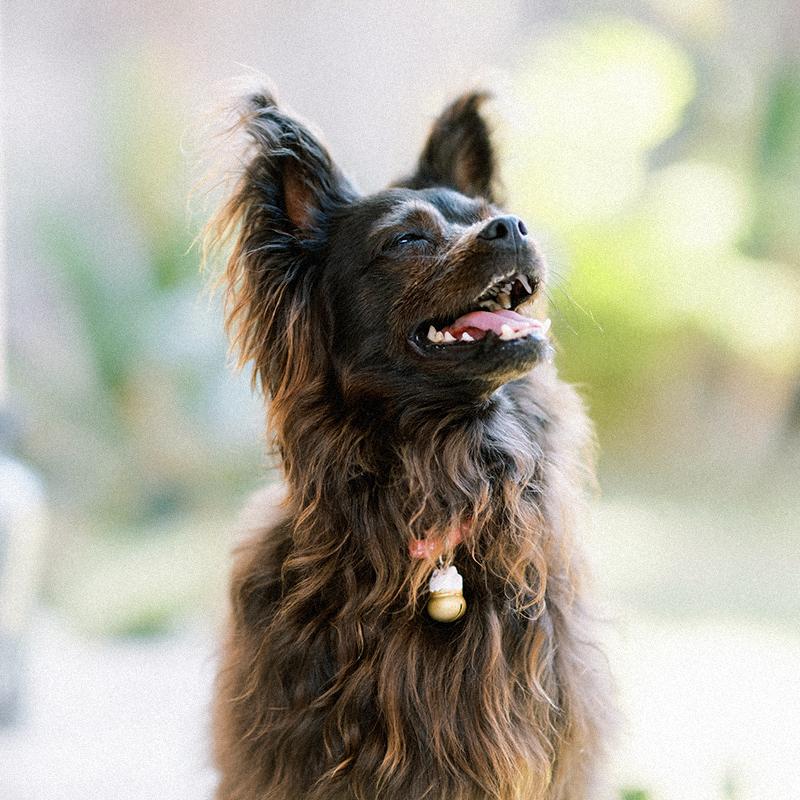 Bali Rescued Dog
